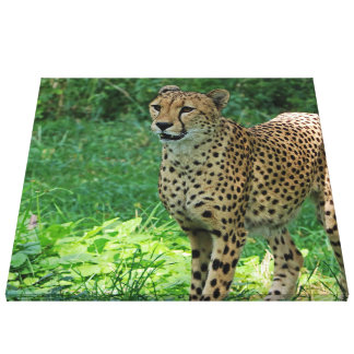 Awesome cheetah canvas print