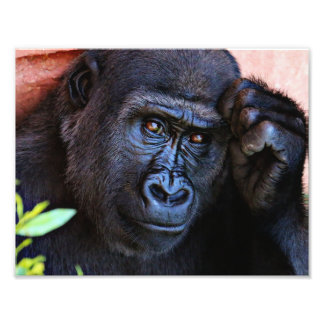 awesome gorilla 1215P Photographic Print