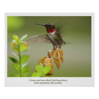 Awesome Hummingbird Poster