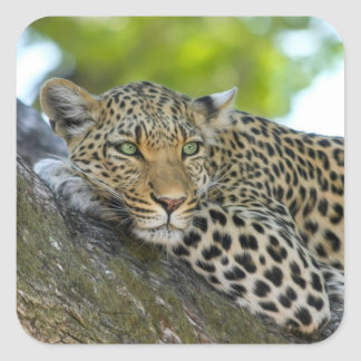 Awesome Leopard Square Sticker