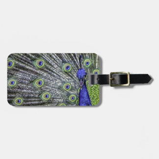 Awesome Peacock Luggage Tag