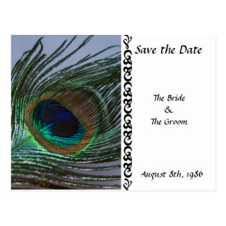 Awesome Peacock Save the Date Postcard