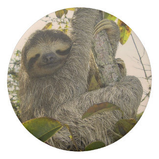 Awesome sloth eraser