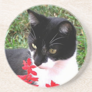 Awesome Tuxedo Cat in Garden Coaster