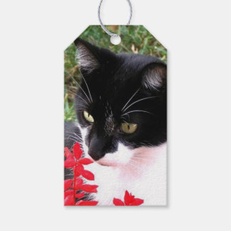 Awesome Tuxedo Cat in Garden Gift Tags