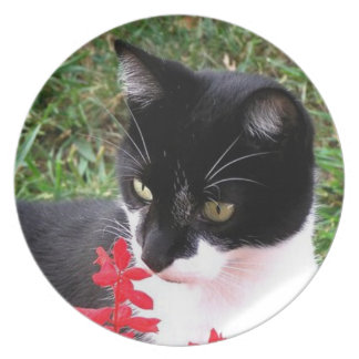 Awesome Tuxedo Cat in Garden Personal Plate