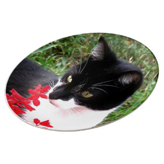 Awesome Tuxedo Cat in Garden Plate
