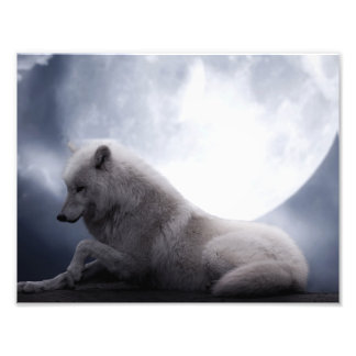Awesome Wolf and Moon White Wolf Photo