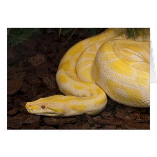 Awesome Yellow Burmese Python Card