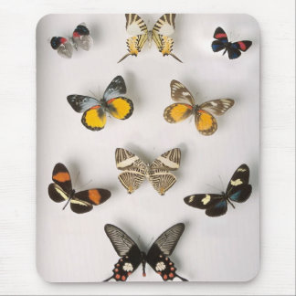 Awsome butterfly collection mouse pad