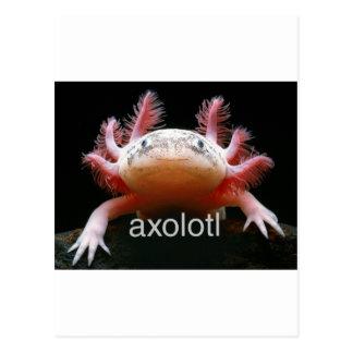 Axolotl Axolotl Axolotl Axolotl Postcard