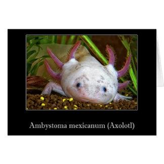 Axolotl Cards