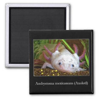 Axolotl Refrigerator Magnet