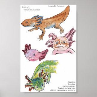 Axolotls Poster