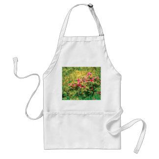 Azalea blooming standard apron