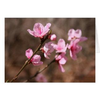 Azalea Blossoms Card