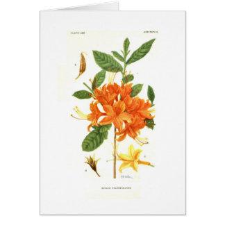Azalea calendulacea by Mary E Eaton Card