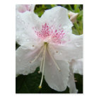 AZALEA FLOWERS White Wet Azaleas Cards Gifts Mugs