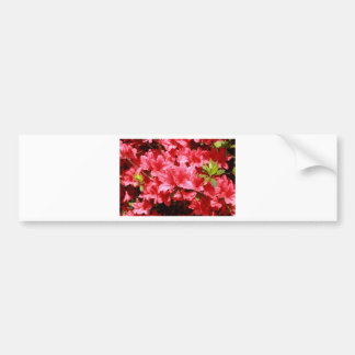 azalea red flowers bumper sticker