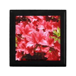 azalea red flowers gift box
