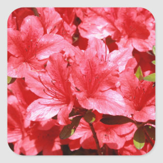azalea red flowers square sticker