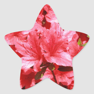 azalea red flowers star sticker