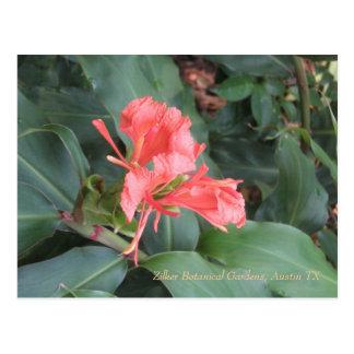 Azalea, Zilker Botanical Gardens, Austin TX Postcard