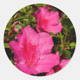 Azaleas Classic Round Sticker