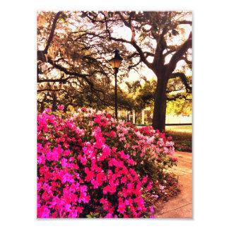 Azaleas In Forsyth Park Art Photo