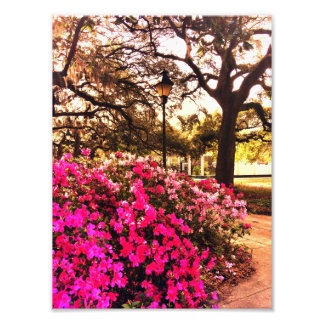 Azaleas In Forsyth Park Photo