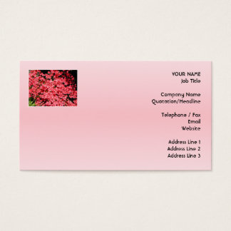 Azaleas. Pretty Pink Flowers. Business Card