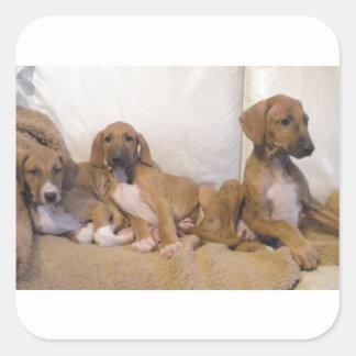 Azawakh Puppies Square Sticker