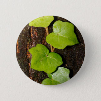 Azores endemic hedera 2 inch round button