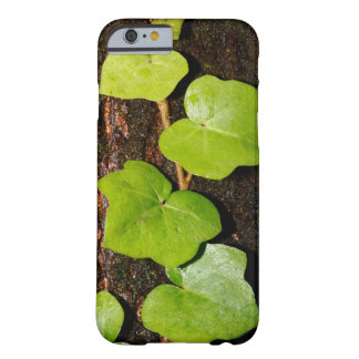 Azores endemic hedera barely there iPhone 6 case