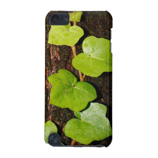 Azores endemic hedera iPod touch 5G cases