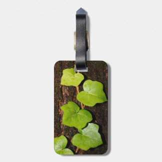 Azores endemic hedera luggage tag