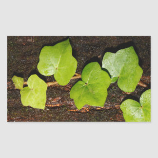 Azores endemic hedera sticker