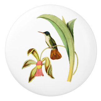 Azure Crowned Hummingbird Ceramic Knob