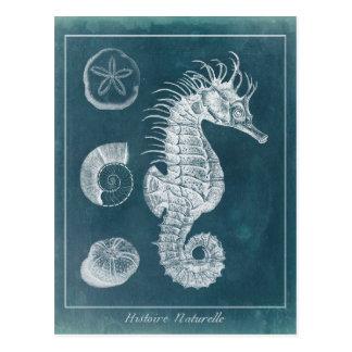 Azure Seahorse Study I Postcard