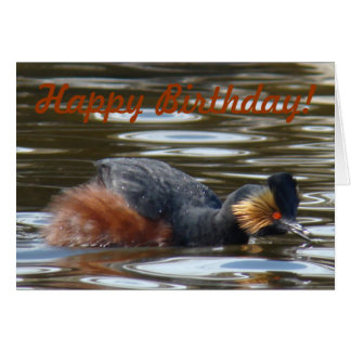 B0008 Eared Grebe Courting Greeting Card