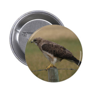 B0010 Swainsons Hawk button