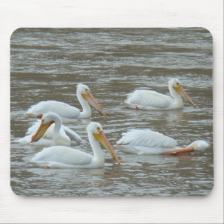 B0016 American White Pelicans Mouse Pad