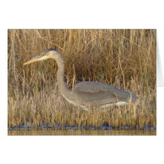 B0019 Juvenile Blue Heron Greeting Card