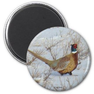 B0022 Ring-necked pheasant magnet