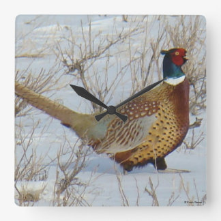 B0022 Ring-necked Pheasant Square Wall Clock