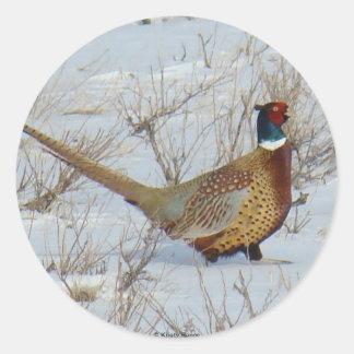 B0022 Ring-Necked Pheasant sticker