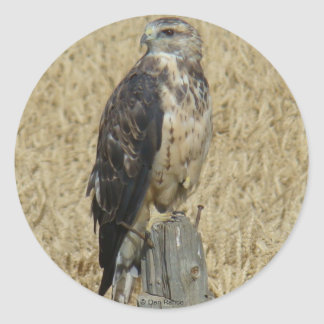 B0036 Ferruginous Hawk Classic Round Sticker