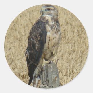 B0036 Ferruginous Hawk Round Sticker