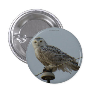 B0038 Snowy Owl 1 Inch Round Button
