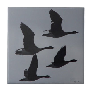 B0046 Canadian Geese in Flight Tile